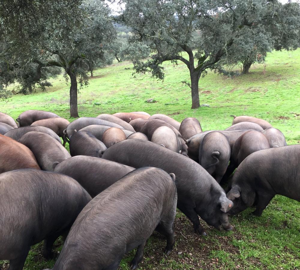 La Hacienda del Zapatero | De la dehesa a la mesa